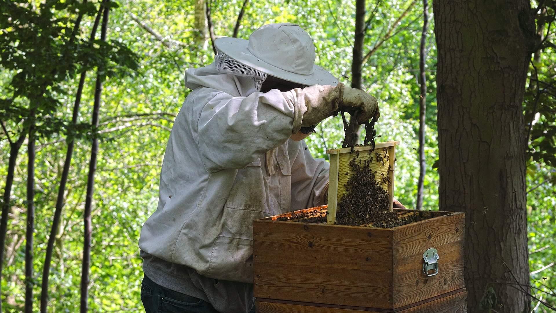 Controle van de bijenvolken